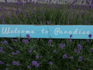 welcome-to-paradise1